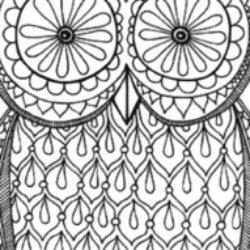 Illustration du profil de tichoupat