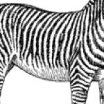 Illustration du profil de Lydia